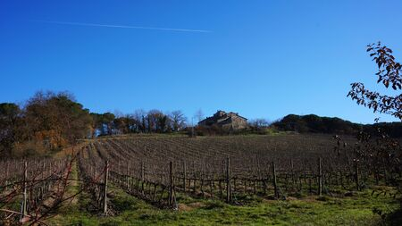 wineyard: Wineyard located in Siena, Italy in the winter