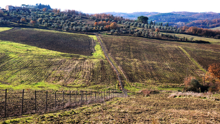 siena italy: Wineyard located in Siena, Italy in the winter