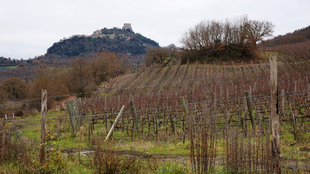 montalcino: Vineyard located in Montalcino, Italy in the winter