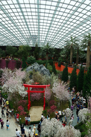 sg: SINGAPORE -20 MAR 2016- The Flower Dome conservatory at the Gardens by the Bay in Singapore includes a very popular seasonal exhibit of Japanese cherry blossom sakura trees.