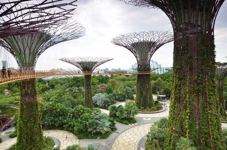 groove: SINGAPORE - MAY 26, 2016: View to Supertree groove at Gardens by the bay in Singapore. Built in 2012 to transform Singapore to garden city.