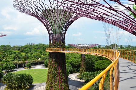 hectares: SINGAPORE-JUN 07, 2016: Day view of The Supertree Grove at Gardens by the Bay in Singapore. Spanning 101 hectares, and five-minute walk from Bayfront MRT Station.