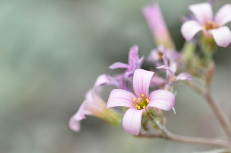 constant: Pink flower in the silver bushes in Garden by the Bay