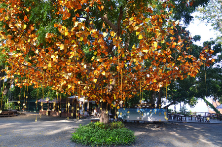 PATTAYA, THAILAND - 22 NOV, 2016: Golden leaves and bells hang on the tree at the entrance of Sanctuary of Truth in Pattay, Thailand Editorial