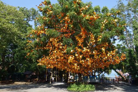 emolument: PATTAYA, THAILAND - 22 NOV, 2016: Golden leaves and bells hang on the tree at the entrance of Sanctuary of Truth in Pattay, Thailand Editorial