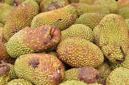 integer: Cempedak or Artocarpus Integer, is a of family Moraceae, and same genus as breadfruit and jackfruit. It is native to southeast Asia