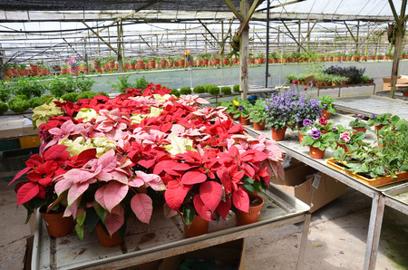 conservatory: Inside a greenhouse for variety of flowers