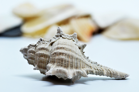 Close up of sea shell isolated on white