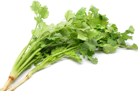 Fresh coriander bunch isolated on white background