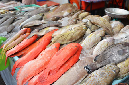 Fresh fishes just caught from sea are being sold at a market in Kota Kinabalu, Sabah Stock Photo