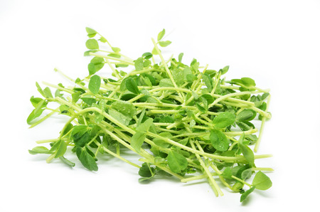 Bunch of pea shoots over a white background Stock Photo