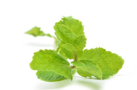 Fresh mint leaves isolated on white background Stock Photo