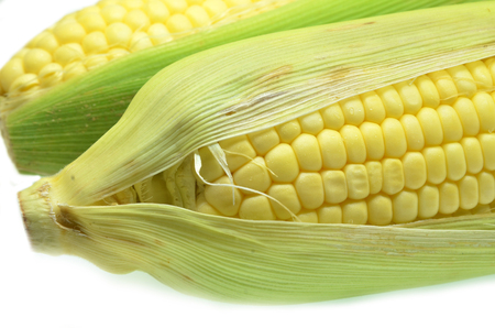 Ear of corn revealing yellow kernels. Grains of ripe corn photo of maize close-up Stock Photo