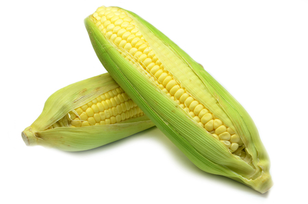 Ear of corn revealing yellow kernels. Grains of ripe corn photo of maize close-up Stock Photo