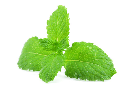 Fresh peppermint leaves on the white background