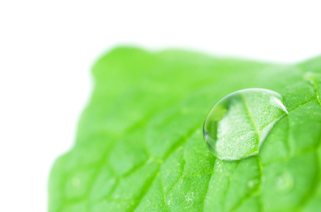 Leaf with a dew drop. Natural background Imagens