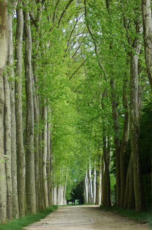 Spring in the gardens of the Palace of Versailles, Paris. The colors are wonderful. Redakční