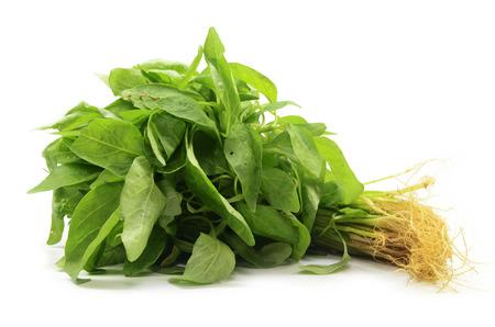 Frischer chinesischer Spinat lokalisiert auf dem weißen Hintergrund.