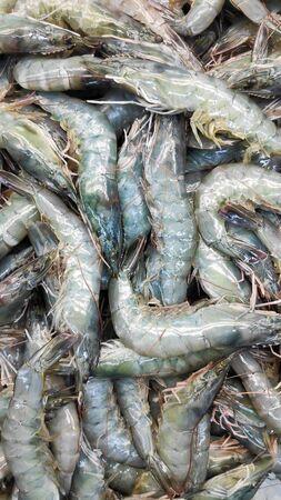 Fresh grey shrimps ready to sale in market Reklamní fotografie