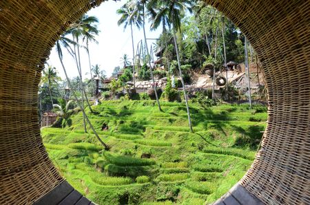 Scenic view of the lush green Tegallalang rice terraces in Ubud, Bali, Indonesia Stok Fotoğraf
