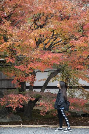 Kyoto, Japan-26 Nov, 2019: Visitor enjoys autumn at Tenryuji Temple in Arashiyama, Kyoto, Japan. Kyoto has 17 UNESCO World Heritage Site landmarks.