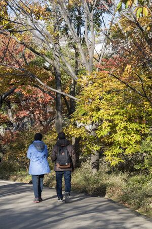 Himeji, Japan- 30 Nov, 2019: Tourists enjoy the beautiful autumn leaves in Koko-en, Himeji. Here is very famous to see autumn foliage colors during November