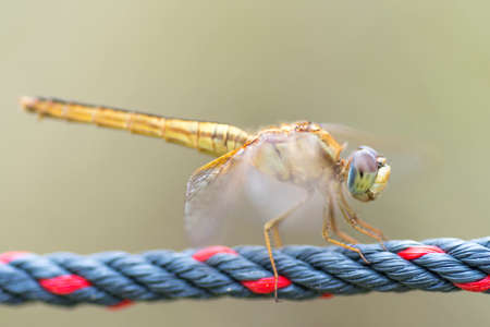 Close up detail of dragonfly with blur background. Selective focus on the eye Reklamní fotografie