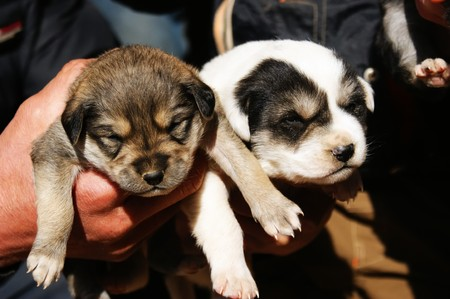 likable: Birth day three cute puppies