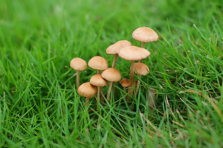 meadowland: The rain is green grass grow a group of mushrooms