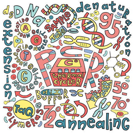 Polymerase chain reaction colored doodle with the description of the process and main components and conditions. Fine for posters, educational materials, pcr for dummies
