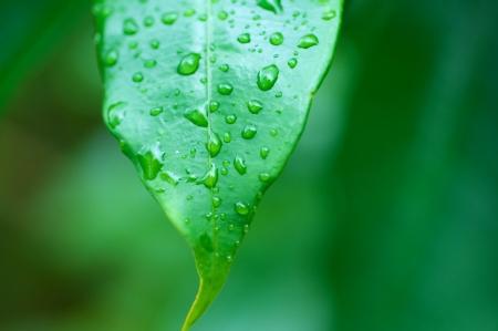 Green leaf with water dews Stock fotó