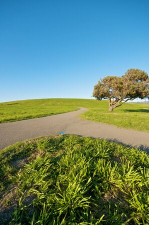 recycle area: Green Grass Landscape and blue sky at Berkeley Marina in the East Bay, California