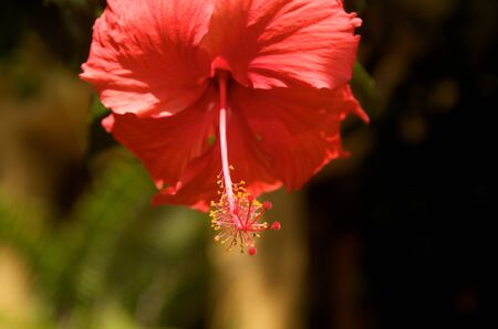 Beautiful Tropical Flower in asia photo