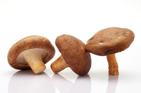 shiitake: healthy mushroom on white background