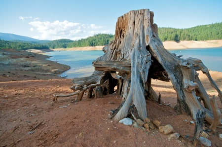 Tree Stump at Trinity Lake in Northern California photo