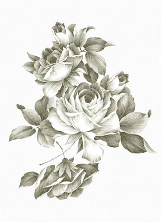 rose stem: Old-styled rose. Freehand drawing  Stock Photo