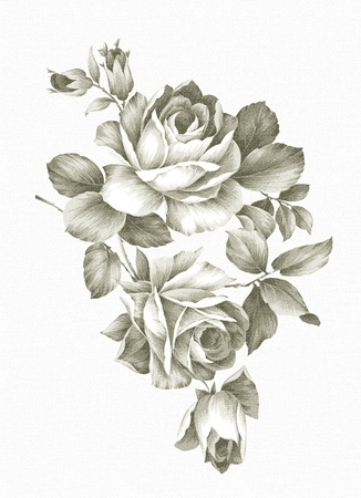 rose stem: hand drawn Old-styled rose.