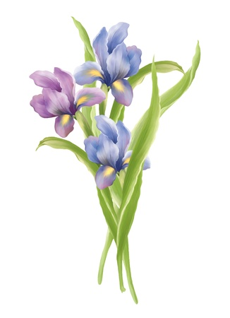 irises:  illustration with beautiful iris bouquet decoration
