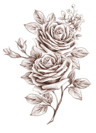 freehand: Old-styled rose. Freehand drawin-03
