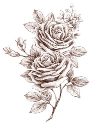 traino: Rose in stile antico. FreeHand drawin-03 Archivio Fotografico