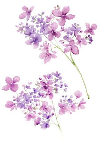 간단한 배경에 수채화 그림 꽃 스톡 콘텐츠