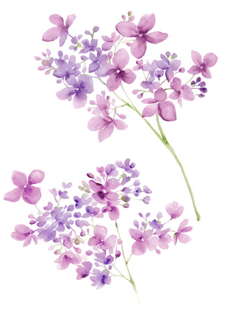 flower petal: watercolor illustration flowers in simple background