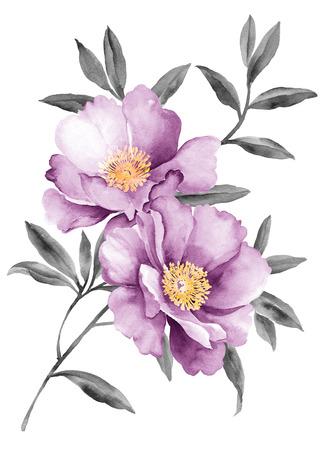 botanical: watercolor illustration flowers