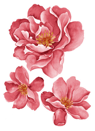 painterly: watercolor illustration flowers