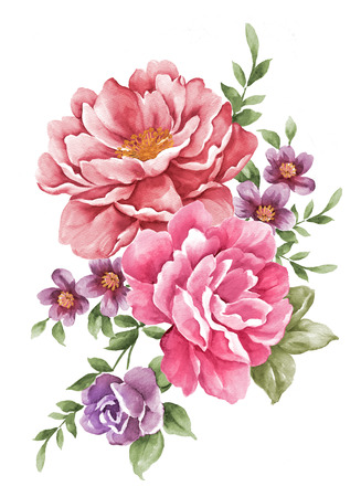 watercolor illustration flowers