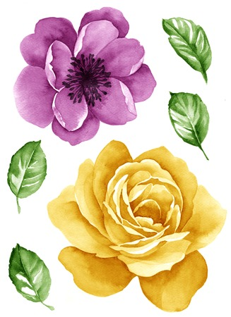 painterly: watercolor illustration flower set in simple white background