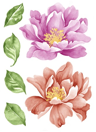 toned: watercolor illustration flower set in simple white background