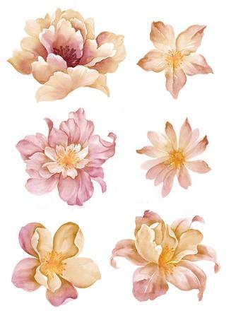 シンプルな白い背景で設定水彩イラスト花 写真素材