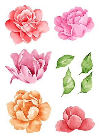 aquarel illustratie bloemen in eenvoudige witte achtergrond