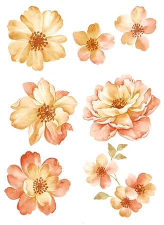 watercolor flower: watercolor illustration flower set in simple white background